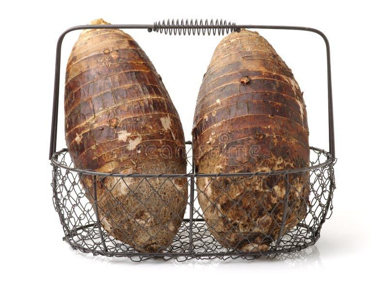 已经是能guangxi有历史记录许多营养素被种植的导致的富有的芋头非常方式的世纪瓷煮熟的不同的著名食物 这是在中国的广西生产的芋头,它种植了h 库存图片