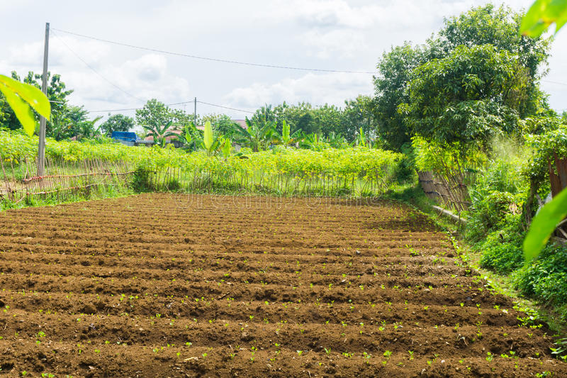 已经被施肥的农田和准备耕种与灌木和美丽的天空当被拍的背景照片  库存照片