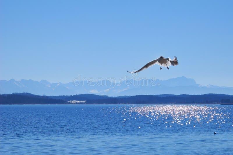 巴伐利亚湖看到starnberger 免版税库存图片