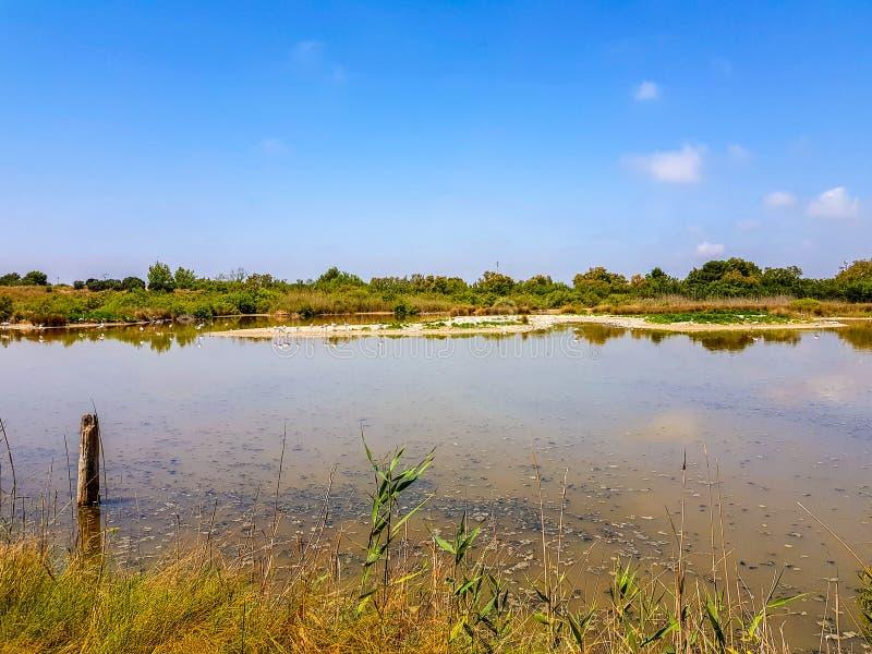 巴伦西亚和盐水湖Albufera的解释的中心可以在自然之间的方式旁边被参观  库存照片