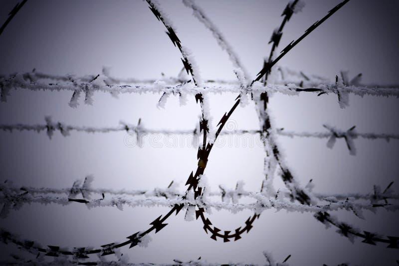 巴勃铁丝网冷的冬日 免版税库存图片