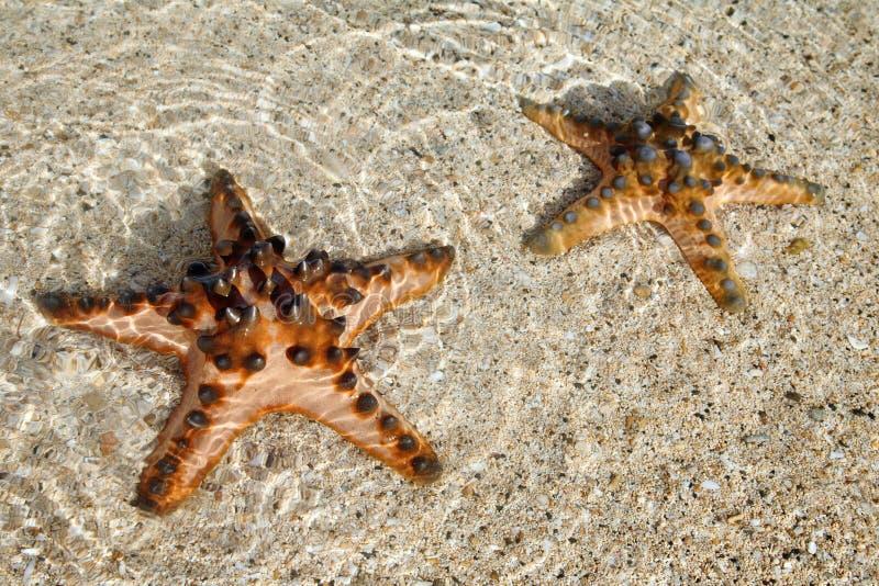巴厘岛印度尼西亚海星 免版税图库摄影