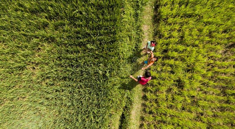巴厘岛印度尼西亚 2016年6月22日 小组未认出的巴厘语孩子为照相机唬弄,当站立在水稻fie时 免版税图库摄影
