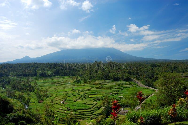巴厘岛米大阳台 免版税图库摄影