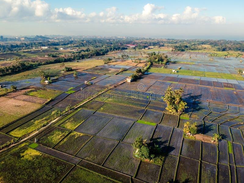 巴厘岛米领域寄生虫或鸟eyeview  免版税库存图片