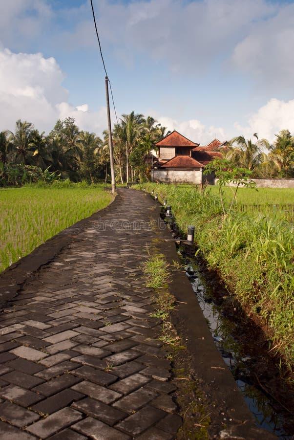 巴厘岛调遣米包围的路石头 免版税库存图片