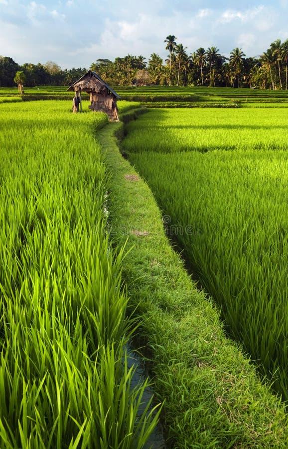 巴厘岛 免版税图库摄影