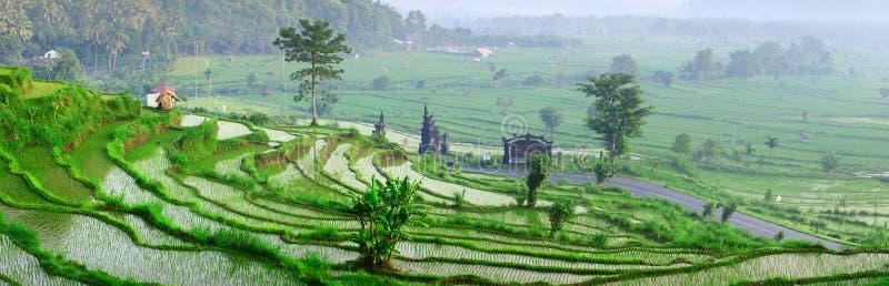 巴厘岛 免版税库存照片