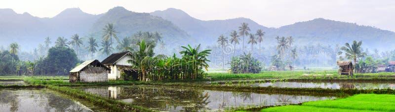 巴厘岛 库存图片