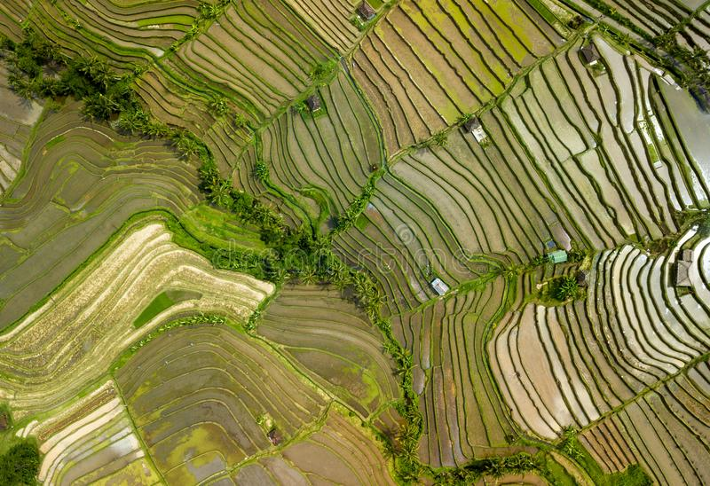 巴厘岛ricefield空中射击顶视图 免版税库存照片