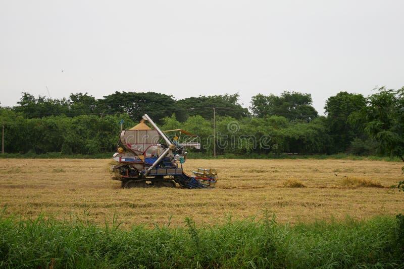 巴吞他尼府,泰国7月8日2018年:泰国农夫推进收割机在泰国给在领域的米 免版税库存图片