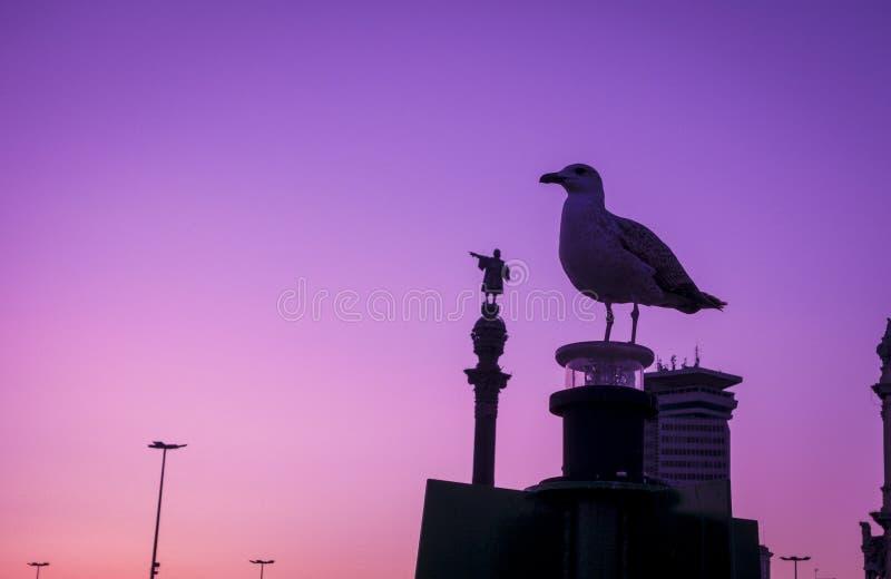 巴塞罗那克里斯托弗・哥伦布雕象和海鸥剪影在日落和蓝色小时清除天空 免版税库存照片
