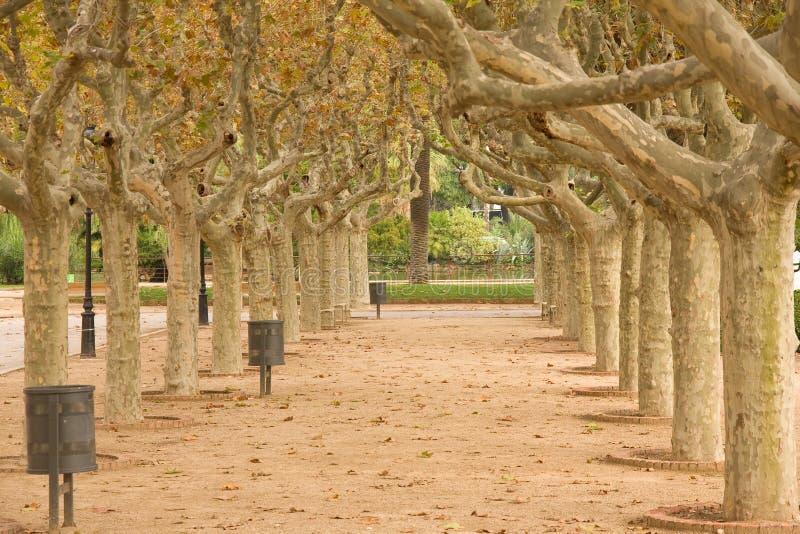 巴塞罗那公园 免版税库存照片