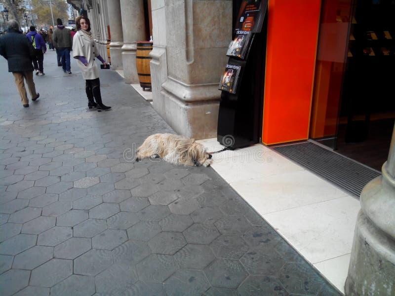 巴塞罗那 库存图片