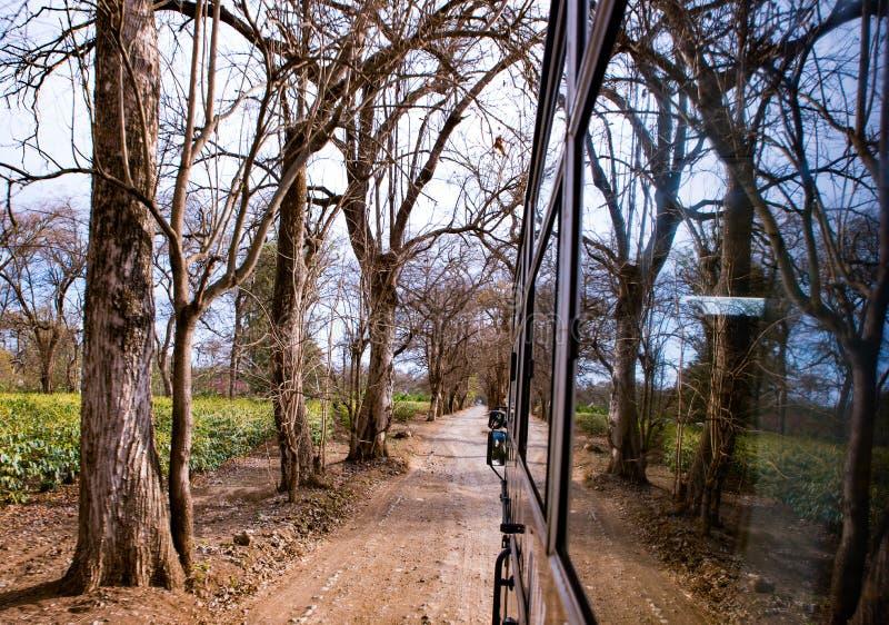 巴士的反思,穿越塞伦盖蒂 免版税库存照片