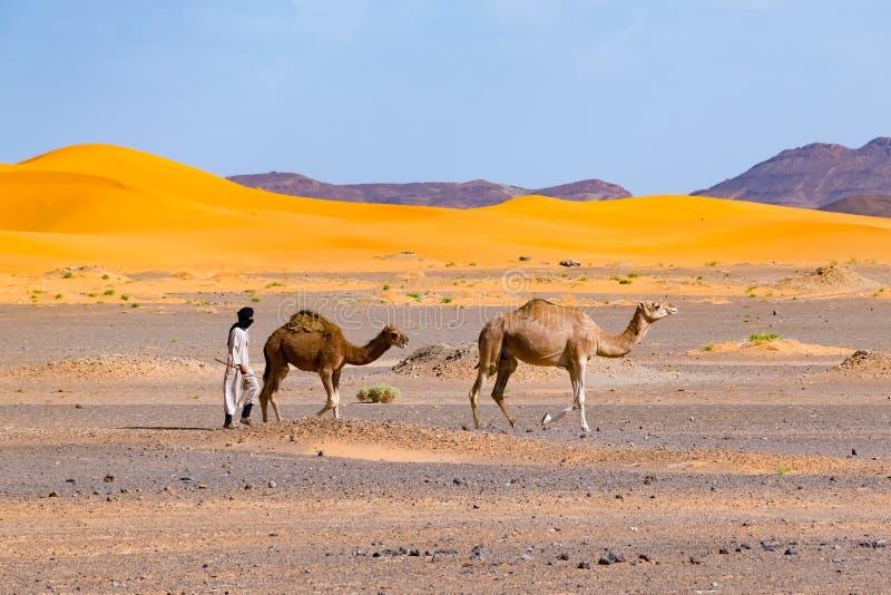 巴巴里人人主导的骆驼有蓬卡车,Merzouga,撒哈拉大沙漠,摩洛哥 库存照片