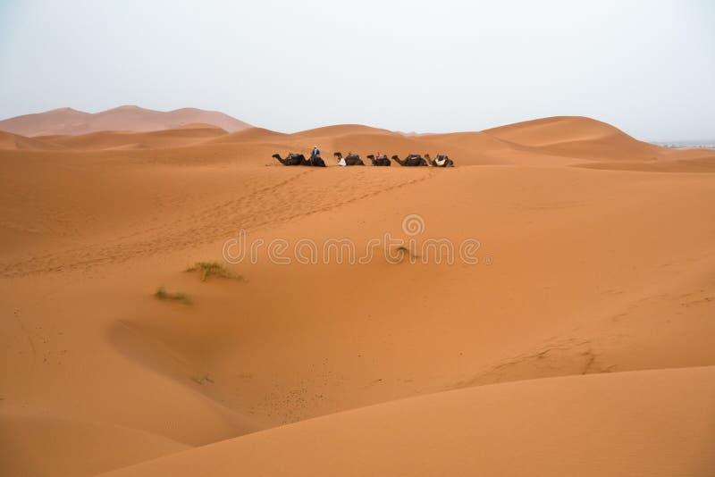 巴巴里人骆驼有蓬卡车在日出,撒哈拉大沙漠,摩洛哥前的尔格Cheggi 免版税库存照片