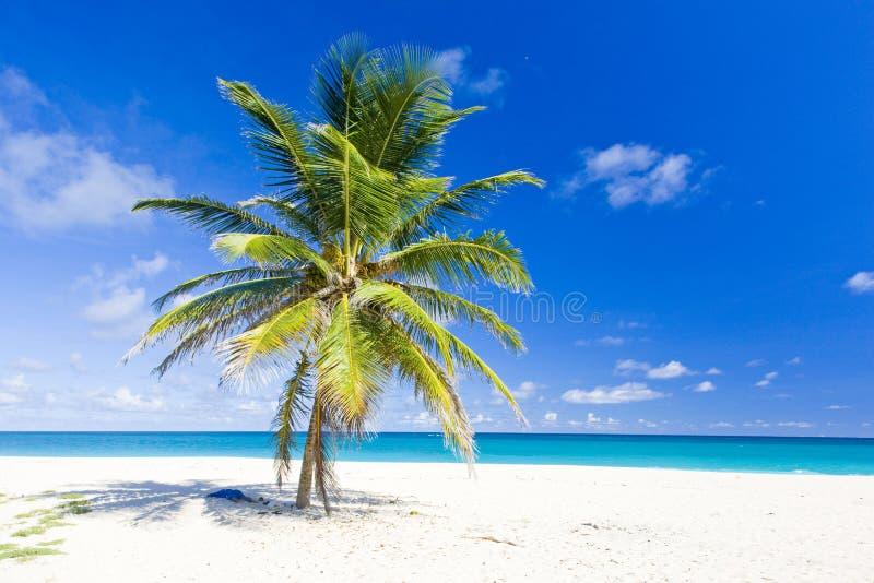 巴布达 免版税库存图片