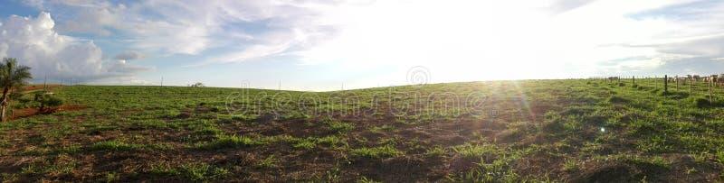 巴拉圭的牧场地概要 免版税库存图片