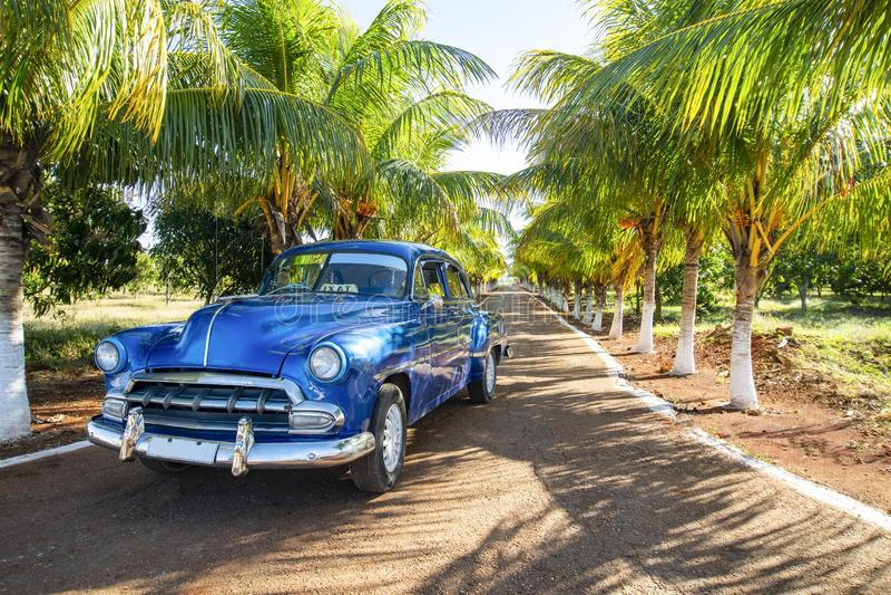 巴拉德罗角,古巴,在胡同有绿色棕榈的,文本的自由空间的美国蓝色经典汽车 库存图片