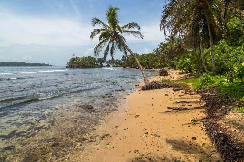 巴拿马树林海滩 免版税库存照片