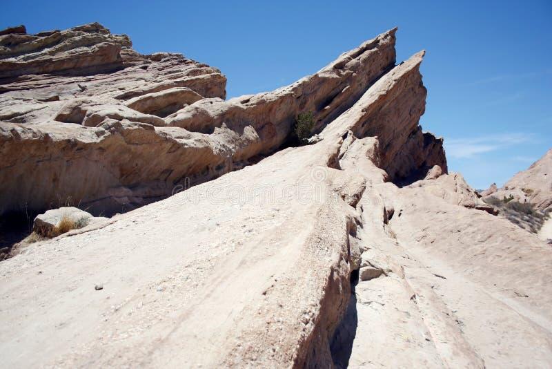 巴斯克斯在加利福尼亚沙漠震动 免版税图库摄影