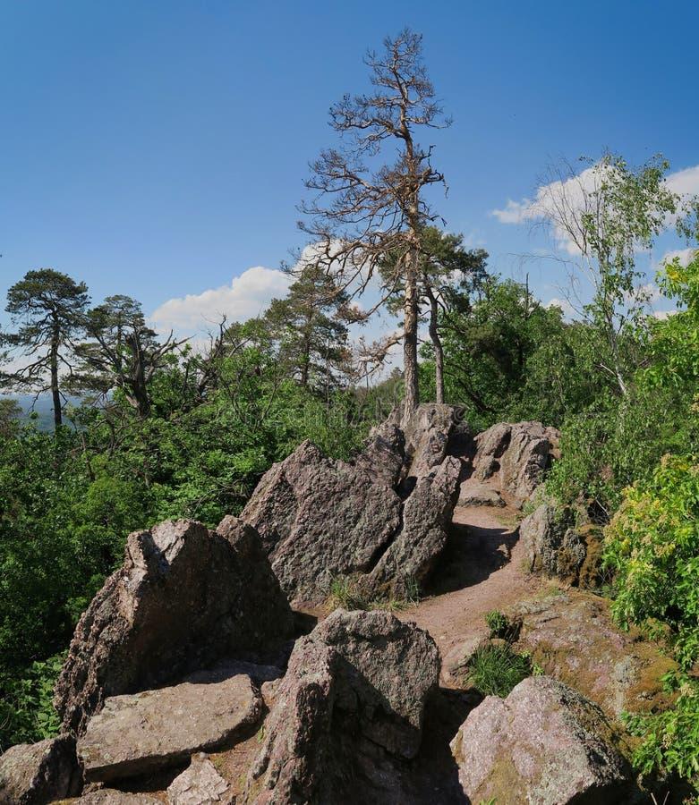 巴比洛姆自然保护区位于布尔诺以北的Lelekovice村上 免版税图库摄影