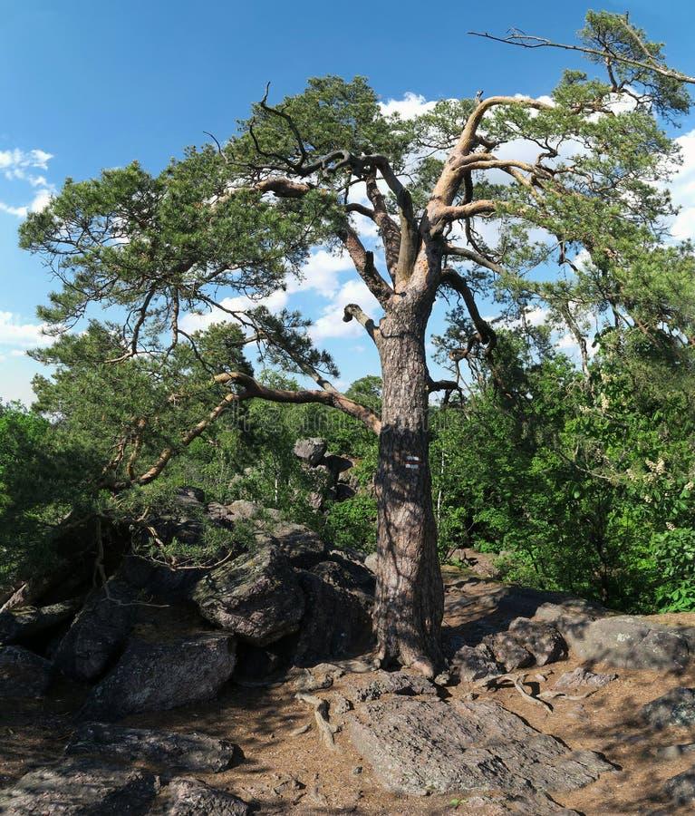 巴比洛姆自然保护区位于布尔诺以北的Lelekovice村上 库存图片