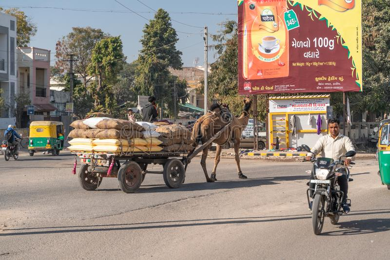 巴特那/印度11 02 2019年:在印度街道上的货物骆驼 免版税库存图片