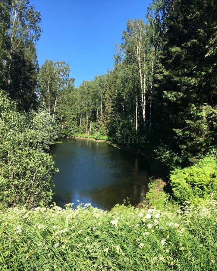 巴甫洛夫斯基公园在巴甫洛夫斯克 湖和森林 免版税库存照片