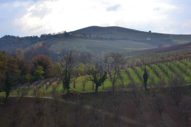 巴罗洛葡萄园,意大利 免版税库存图片