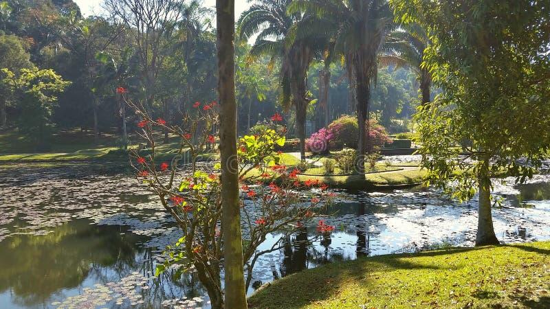 巴西圣保罗植物园景观 免版税图库摄影