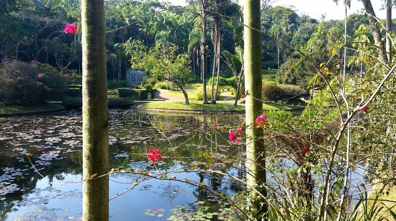 巴西圣保罗植物园景观 库存图片