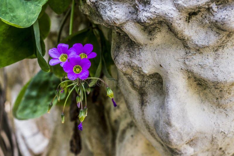 巴西室外植物 免版税库存照片