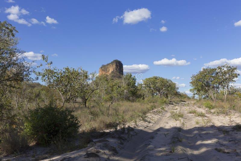 巴西cerrado的风景 免版税图库摄影