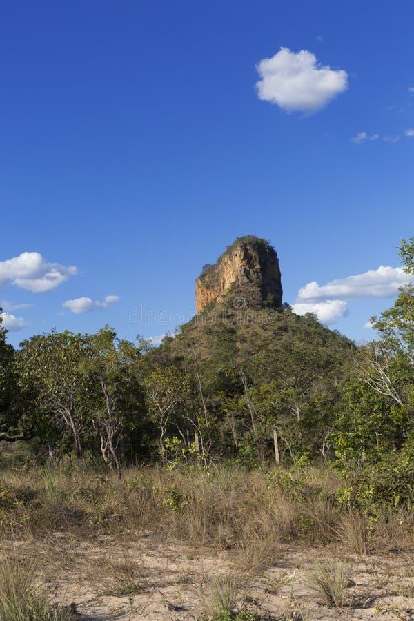 巴西cerrado的风景 免版税库存照片