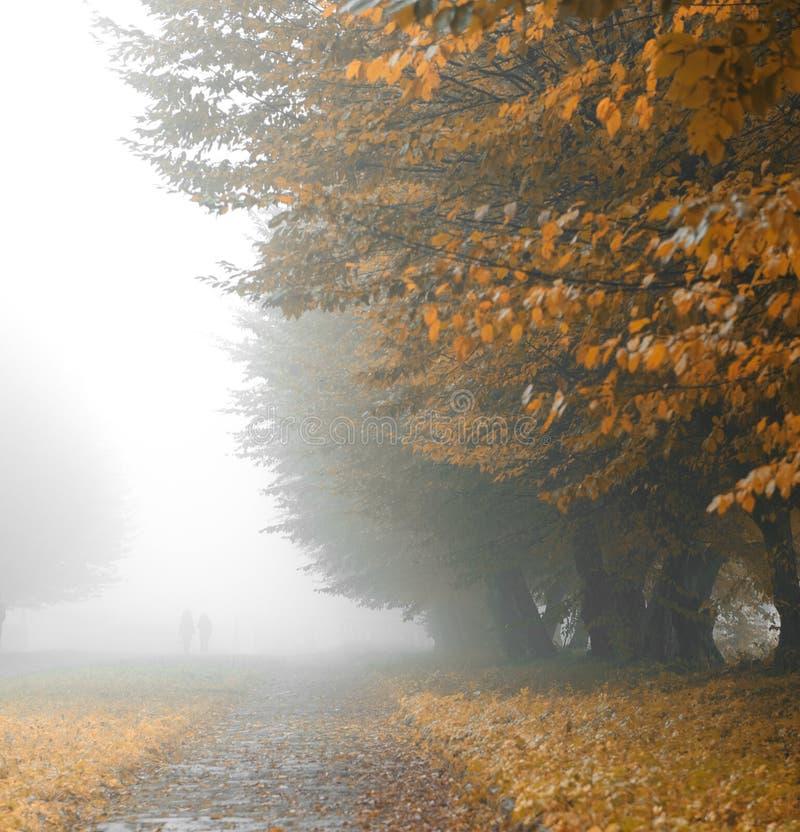 巷道有雾的公园 库存照片