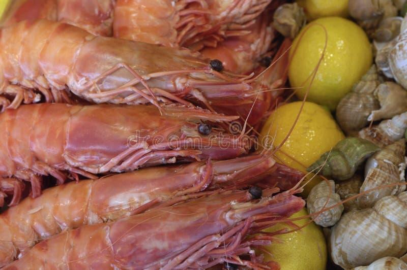 市场虾 免版税库存图片