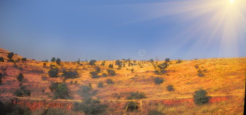布什全景干燥丛林在印度 免版税库存照片