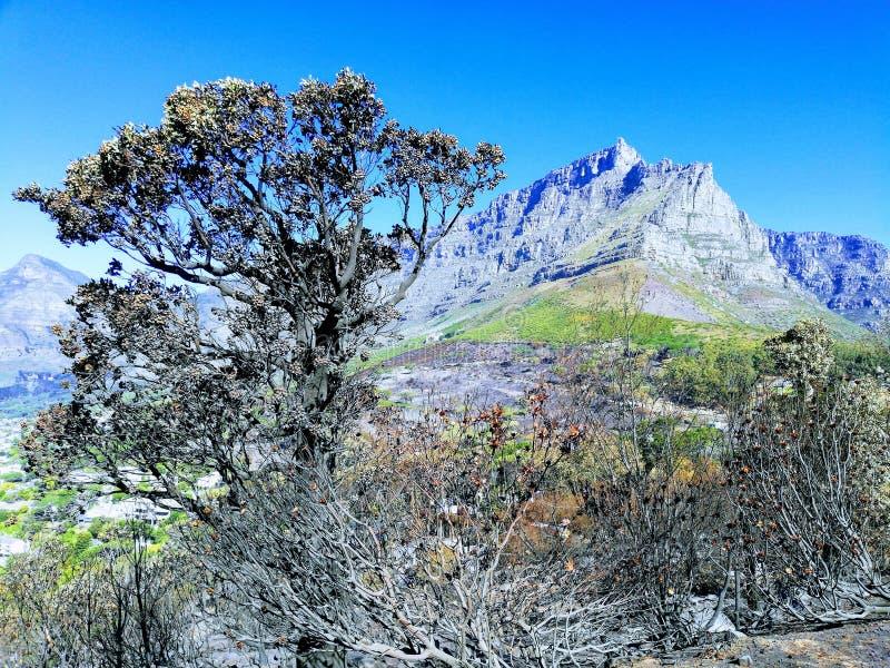 布什火灾后的台山自然保护区 库存照片