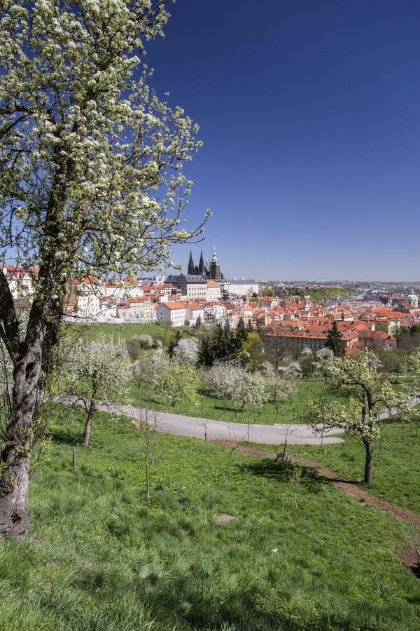 布拉格和布拉格城堡垂直视图 库存图片