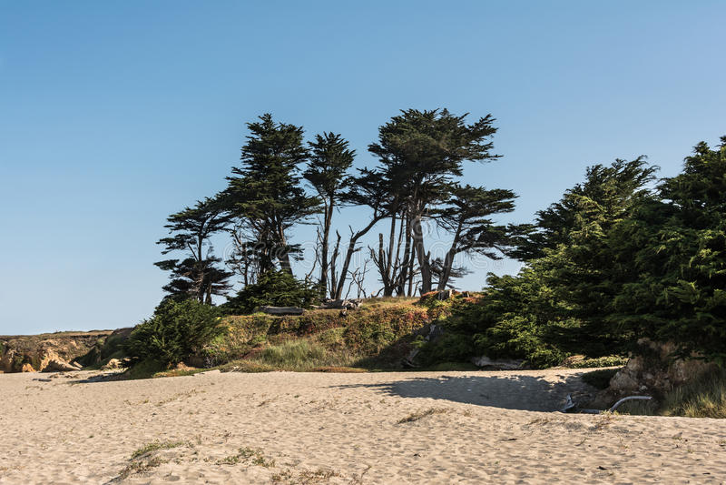布拉格堡沙子海滩,加利福尼亚 免版税库存照片