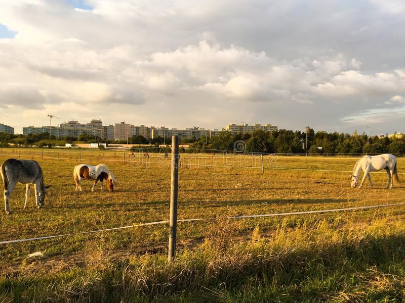 布拉格市农场 免版税库存图片