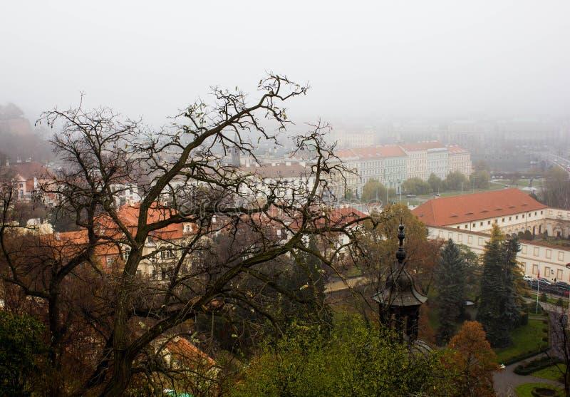 布拉格红色屋顶的不祥的看法有雾的秋天天气的 在布拉格屋顶背景的树枝在哥特式的 免版税库存图片