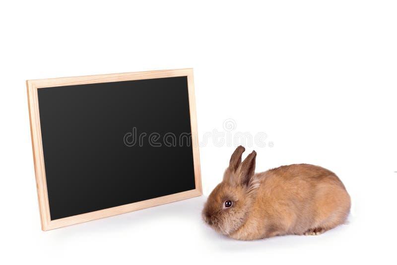 布朗兔子和桌在白色 免版税库存照片