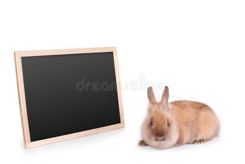 布朗兔子和桌在白色 图库摄影