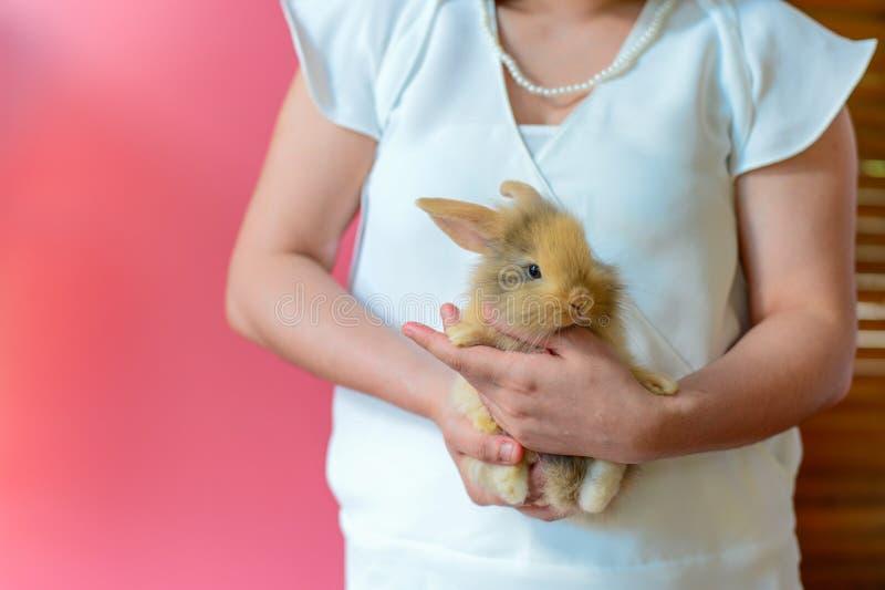 布朗兔子穿在桃红色背景的白色衬衣的在手边妇女 免版税图库摄影