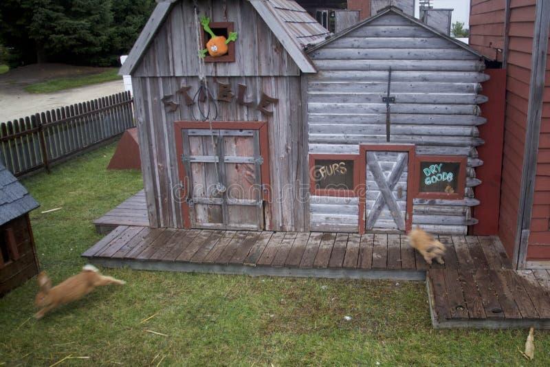 布朗兔宝宝高尾巴它,当震惊从他们的一个微小的万圣夜兔子镇的木板走道的基于 免版税图库摄影