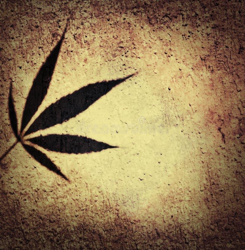 布朗和叶子的米黄大麻canabis ganja阴影在门面的围住背景 库存照片