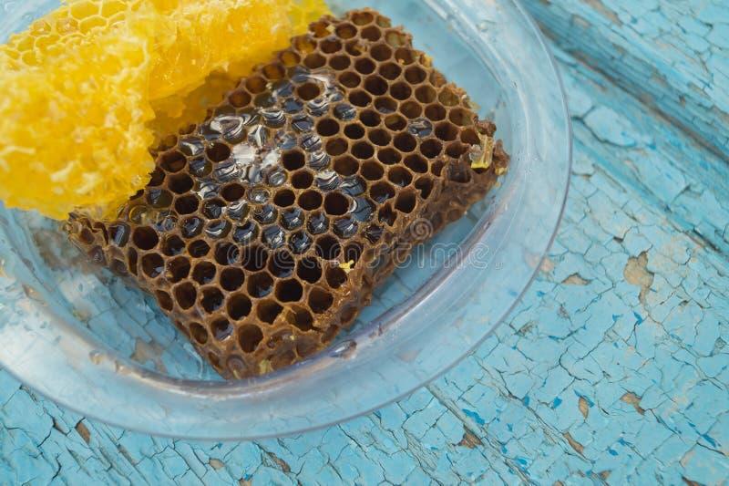 布朗和黄色蜂窝在清楚的塑料板材在蓝色木背景形成 免版税库存照片